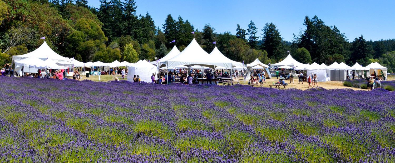 San Juan Island Lavender Festival at Pelindaba Lavender Farm