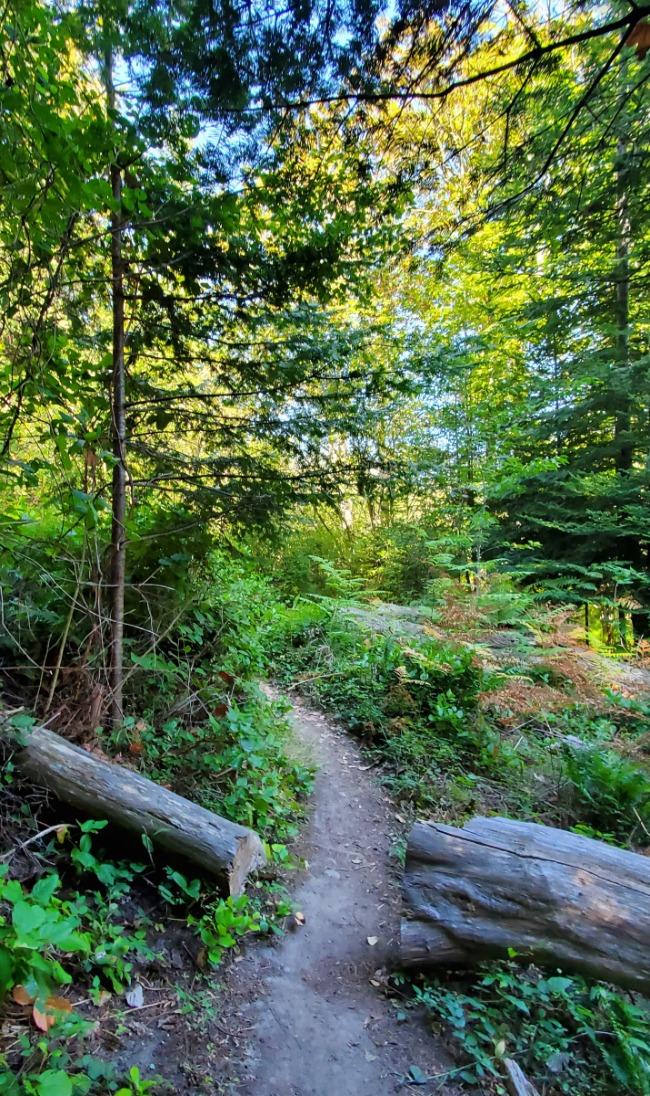 Forest Path at the San Juan Islands Sculpture Park