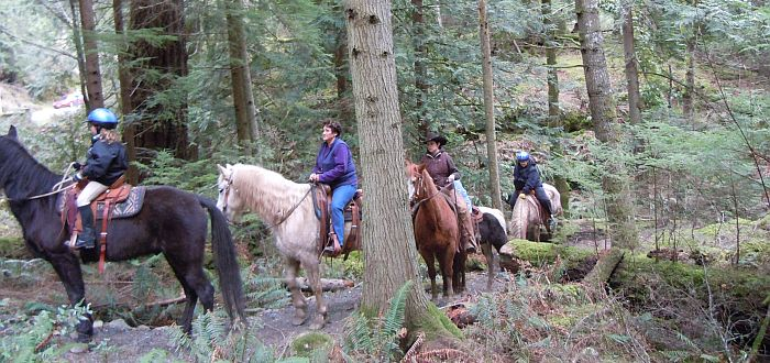 Orcas Trail Rides - Group in Forrest