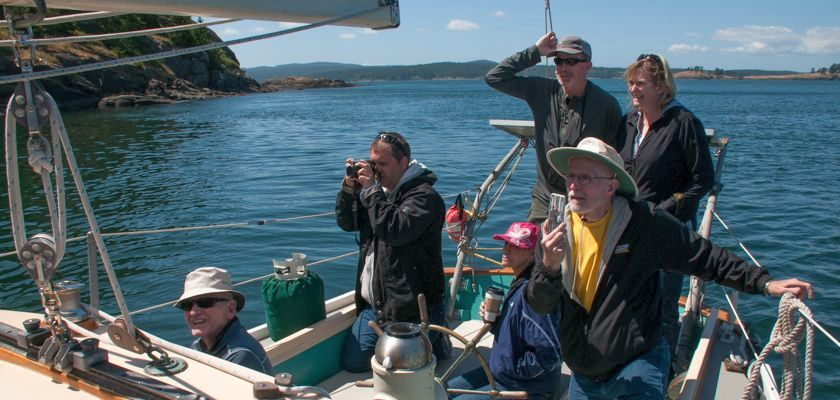 All Aboard Sailing Whale Watching - Group