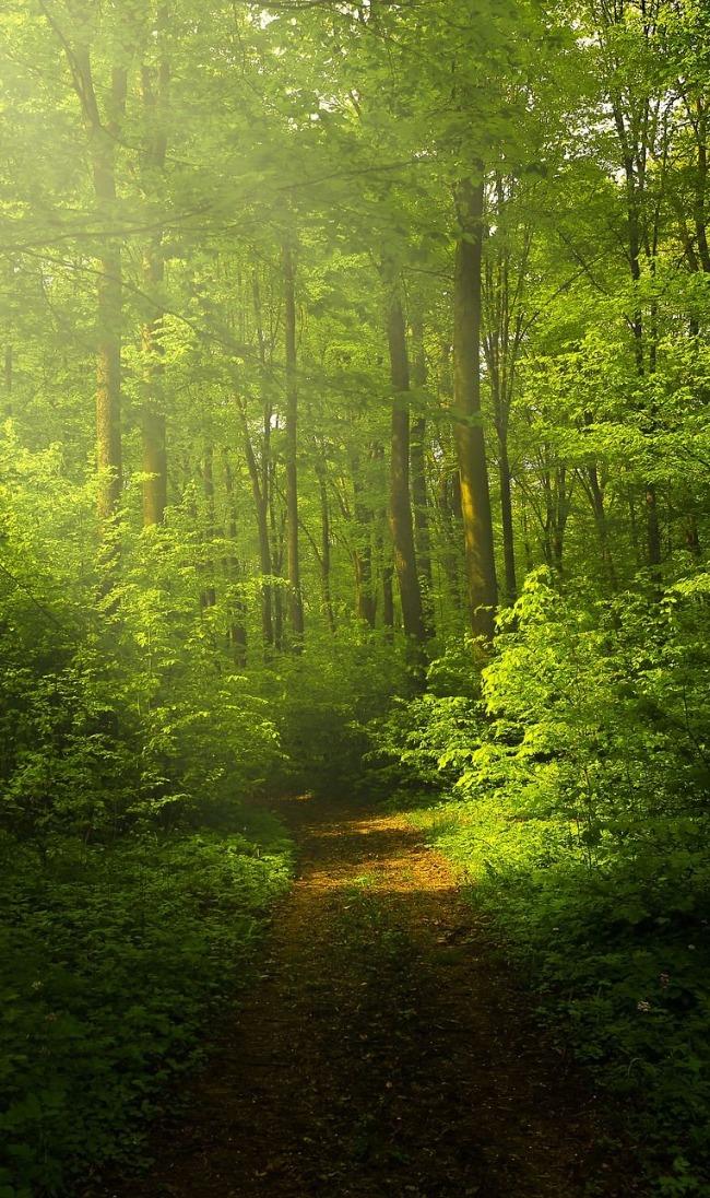 Hands On Forestry for San Juan Woodlands - Workshops