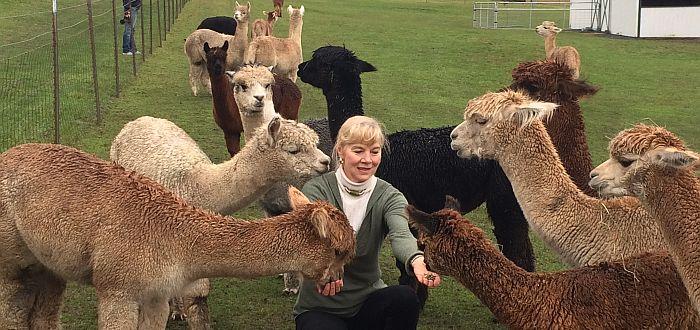 Krystal Acres Alpaca Farm - Hand Feeding