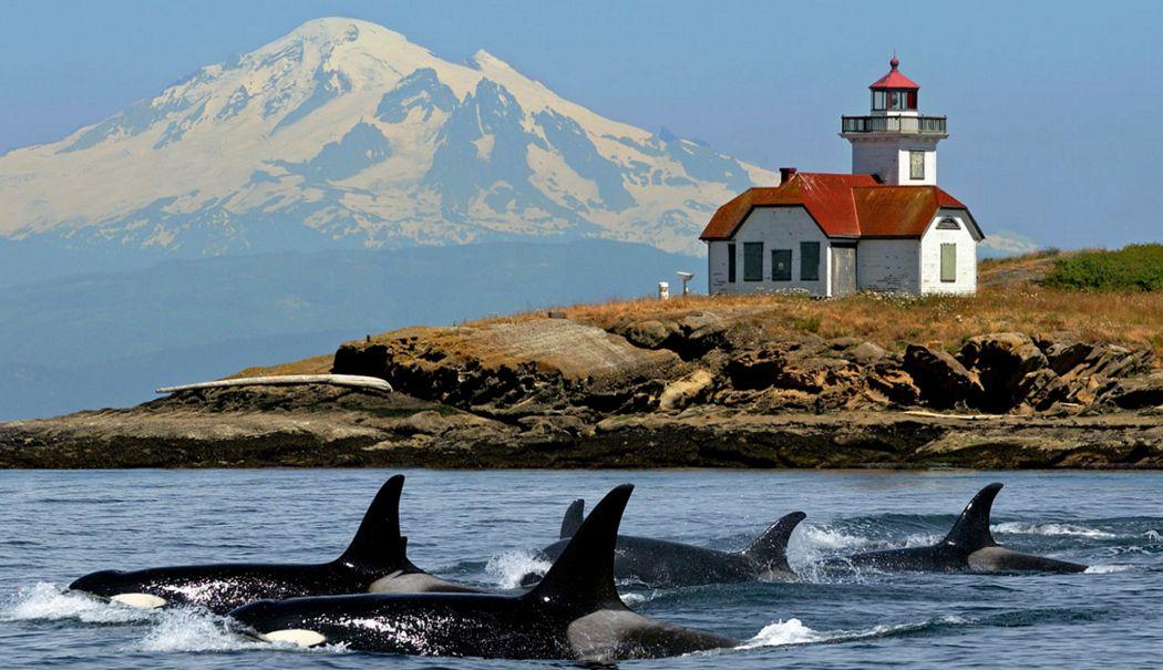 San Juan Cruises Whale Watching,Mt. Baker, Patos Lighthouse