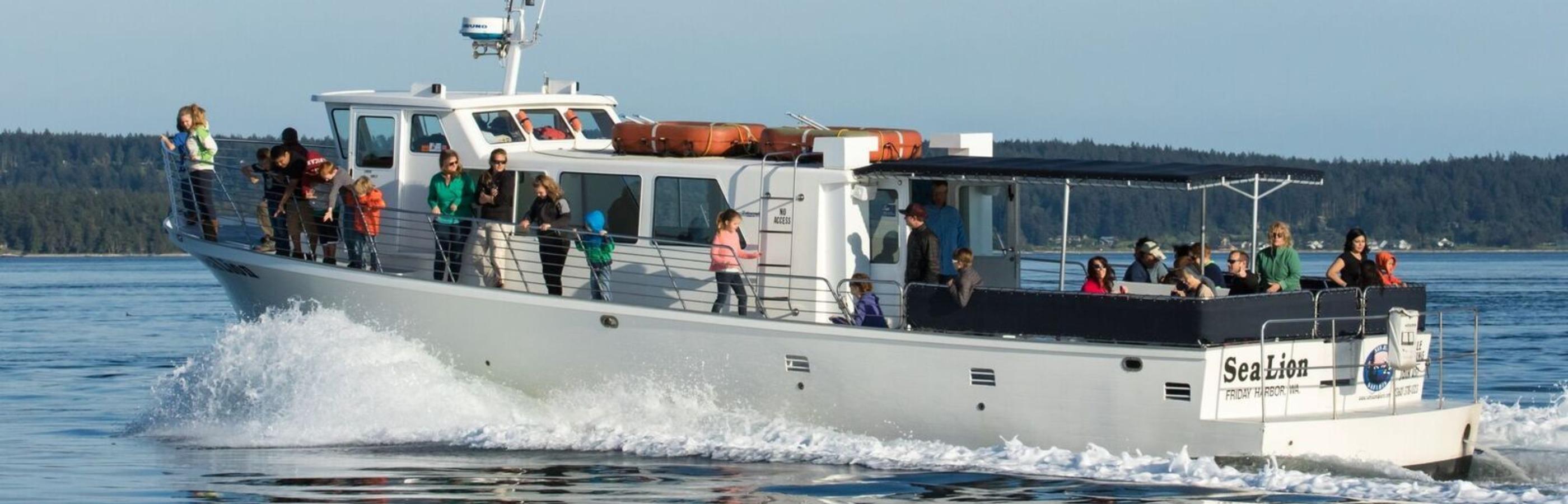 San Juan Safaris Meetings - Sea Lion