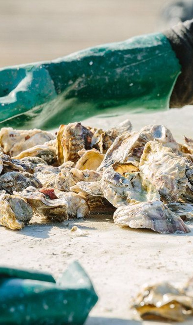 Westcott Bay Shellfish Company - Pacific Oysters